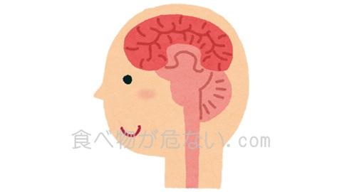 脳の60%は脂質で構成されています