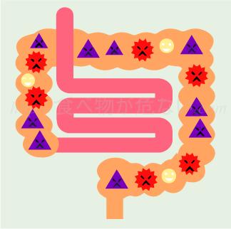 悪玉菌が優勢の腸内