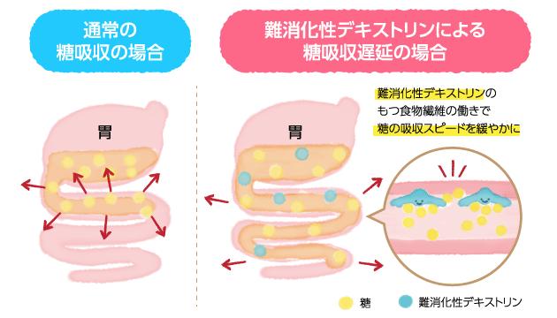 難消化性デキストリンは食事に含まれる糖質に絡みつくことで、糖の吸収速度を遅らせる作用もあります。