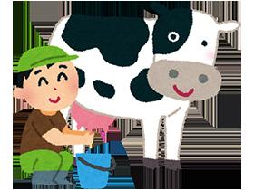産後50日を過ぎると、私たちが飲んでいる牛乳の成分になるため、そこから牛乳用として毎日搾乳されるのです。