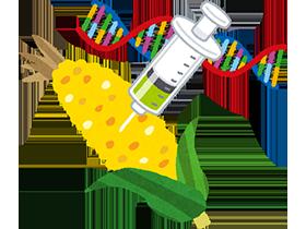 難消化性デキストリンの原料は、遺伝子組み換えトウモロコシ