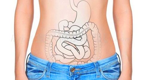 免疫力低下は腸内環境の悪化!肉の過剰摂取が善玉菌を減らし悪玉菌を増やす